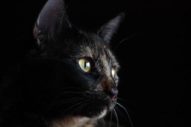 Portrait d'un chat noir aux yeux jaunes