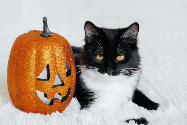 Portrait de chat noir et blanc mignon avec citrouille d'halloween