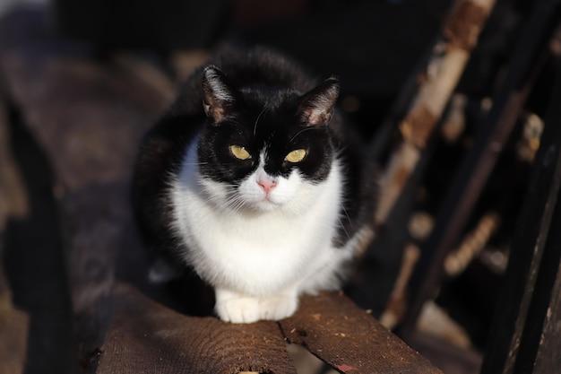 Portrait d'un chat noir et blanc par une journée ensoleillée