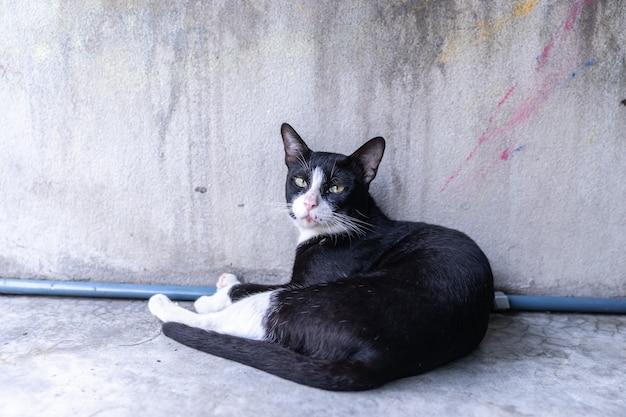 Portrait chat noir égaré, couché sur le mur de ciment grunge