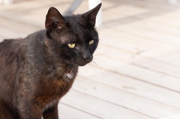 Portrait d'un chat noir mignon