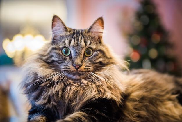 Portrait d'un chat pelucheux agissant surpris