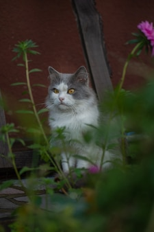 Portrait de chat de printemps émotionnel. portrait de chat de printemps. fraîcheur et arôme agréable d'herbes et de fleurs d'été.