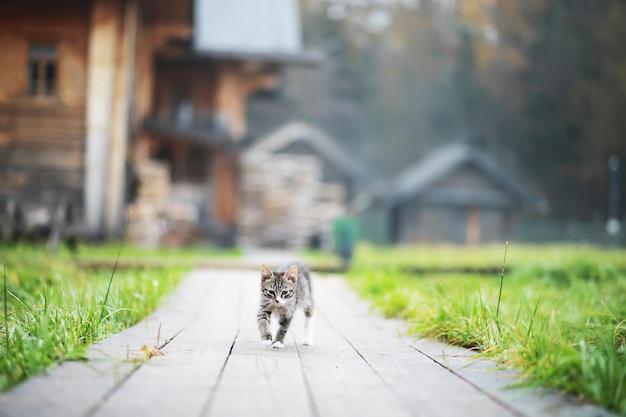 Portrait de chat rayé, gros plan mignon petit chat gris, portrait de chat au repos