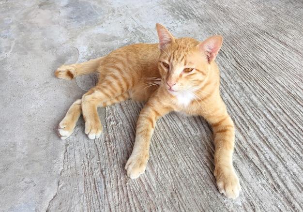 Portrait de chat rouge heureux. chat domestique en activité relax. animal, animal - instantané de smartphone