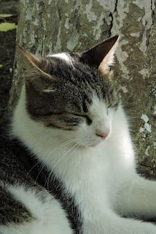 Portrait de chat de rue
