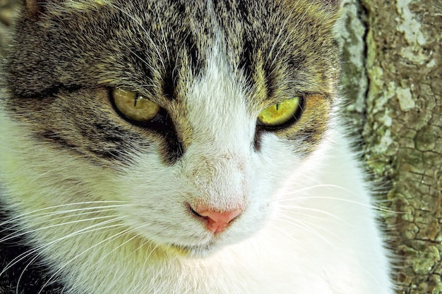 Portrait de chat de rue