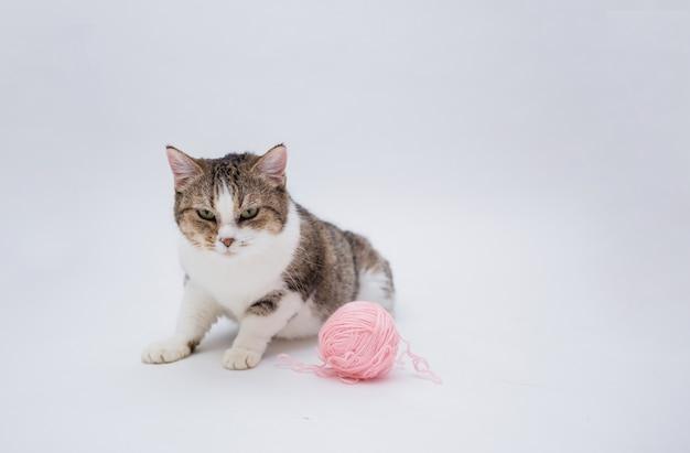 Portrait d'un chat tigré avec une boule de fourrure rose sur fond blanc isolé