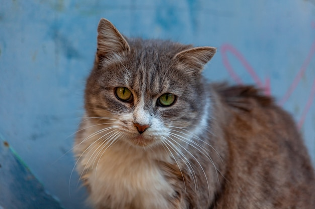 Un portrait de chat. visage de chat se bouchent dans la rue. nez et yeux de chat