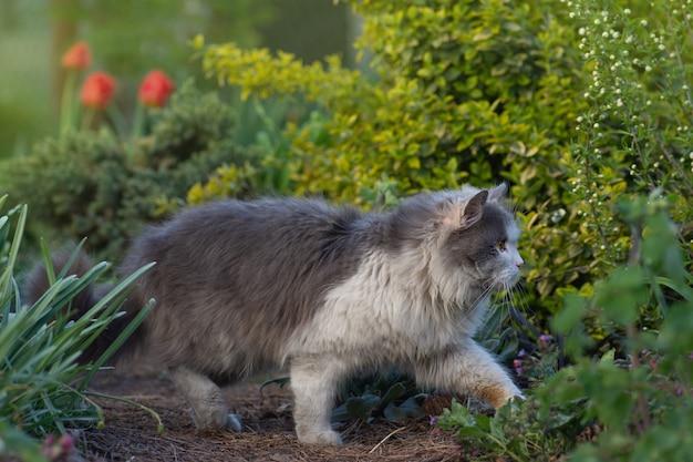 Portrait d'un chaton mignon de profil. portrait de chat sur fond de champ de fleurs