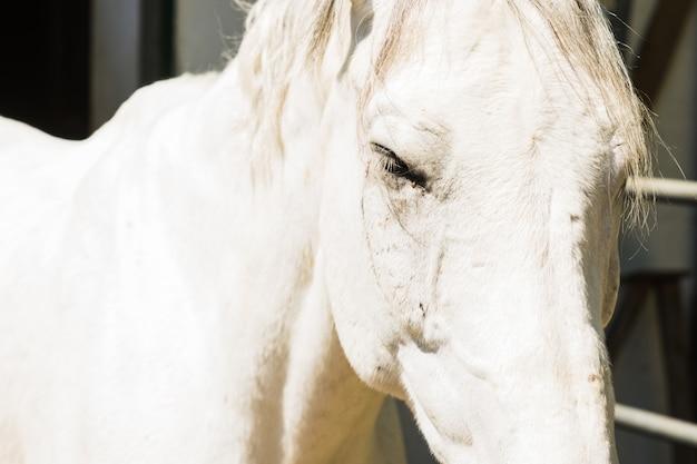 Portrait de cheval à l'extérieur