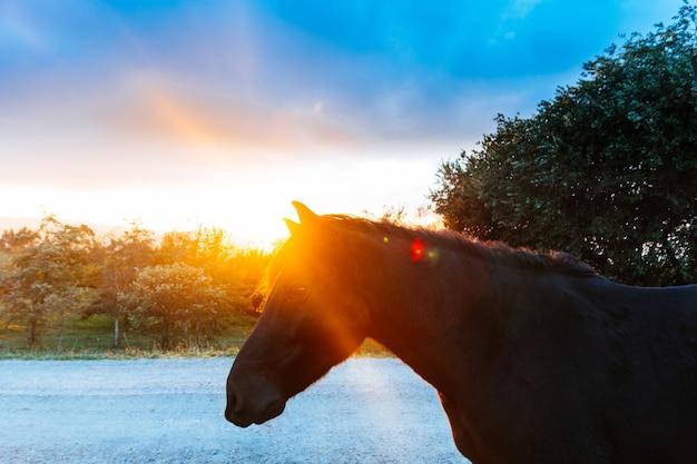 Portrait de cheval noir dans la forêt d'automne