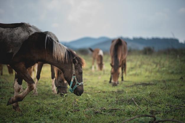 Portrait, cheval, pelouse, montagne, bleu, ciel