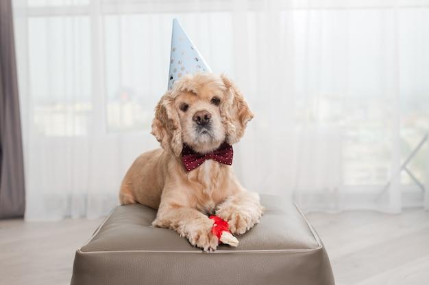 Portrait de chien d'anniversaire mignon avec os