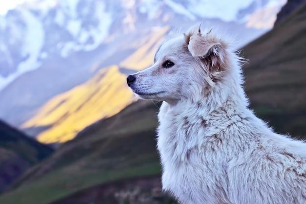 Portrait d'un chien blanc sur une des montagnes