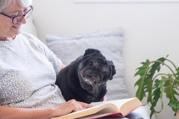 Portrait d'un chien carlin noir curieux assis sur un canapé avec son propriétaire principal, se relaxant ensemble à la maison