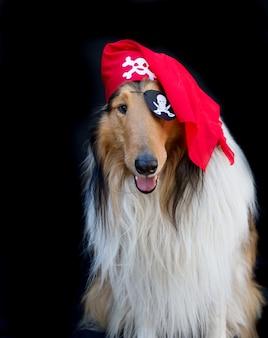 Portrait d'un chien colley doré en costume de pirate isolé sur fond noir