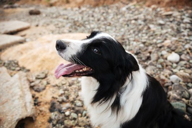 Portrait de chien mignon assis au bord de la mer