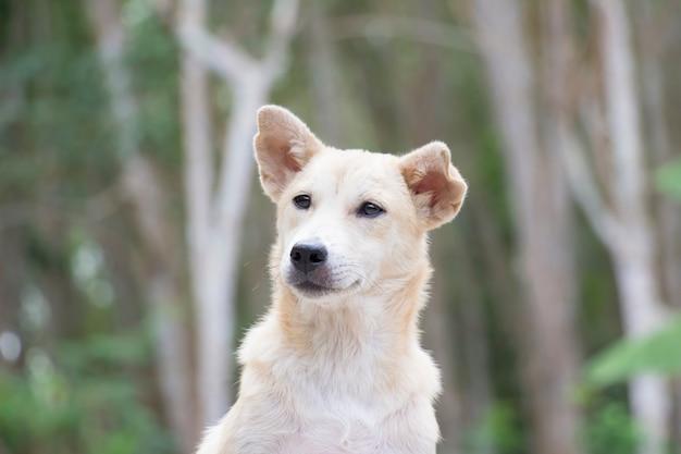 Portrait de chien avec la nature