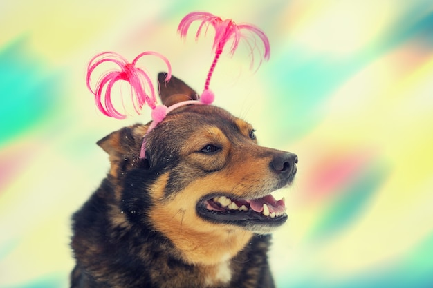 Portrait de chien portant un bandeau de noël