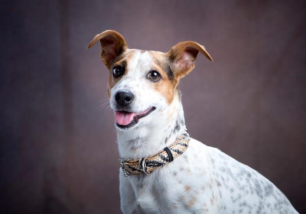 Portrait d'un chien qui sort sa langue et fait une grimace