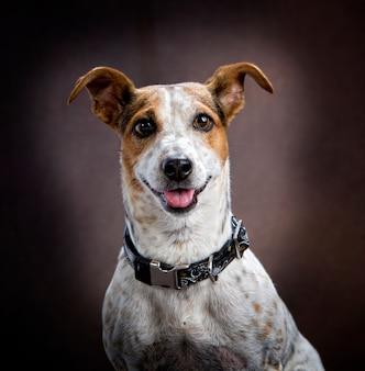 Portrait d'un chien souriant avec sa langue