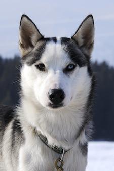 Portrait de chien sportif en hiver