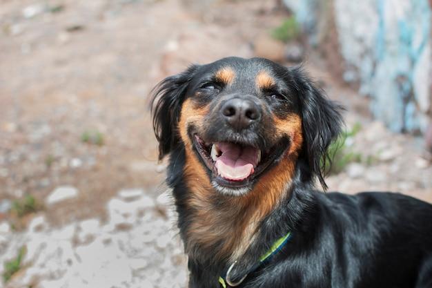 Portrait d'un chien très drôle qui semble sourire joyeusement illuminé par la lumière du soleil