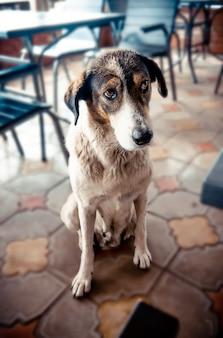 Portrait d'un chien triste assis sur le sol regard triste d'un chien