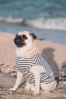 Portrait d'un chien vadrouille sur la plage
