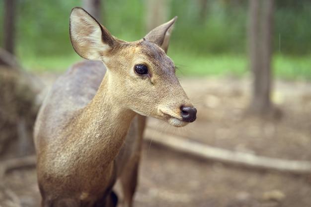 Portrait debout jeune cerf en forêt