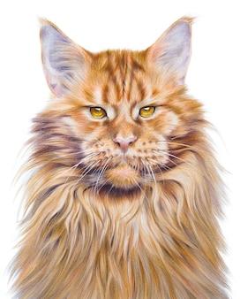 Portrait de dessin à la main coloré d'un chat maine coon. animal de compagnie sur fond blanc. dessin à la main réaliste