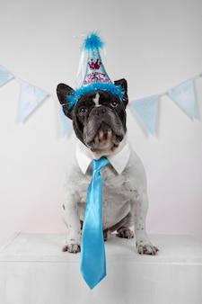 Portrait de drôle de bouledogue français avec cravate bleue, fanions de fête et ballons colorés sur blanc.
