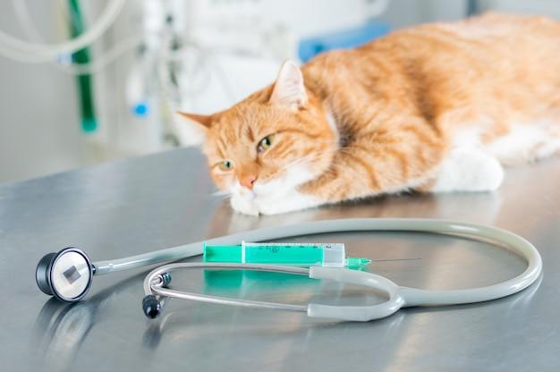 Portrait d'un drôle de chat roux sur la table dans la salle d'opération. concept de médecine vétérinaire