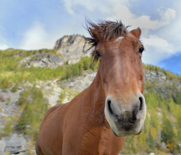 Portrait drôle d'un cheval à la crinière dans le vent avec la montagne