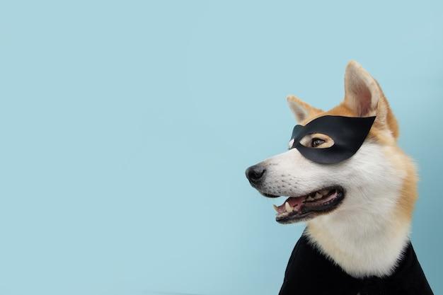 Portrait drôle de chien akita célébrant halloween ou carnaval avec un costume de héros noir.