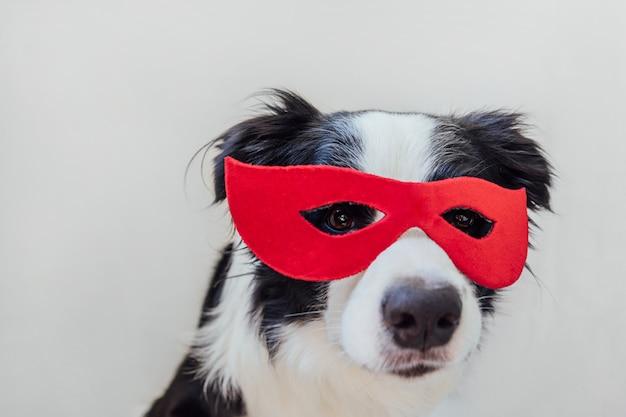 Portrait drôle de chien mignon border collie en costume de super-héros isolé sur fond blanc. chiot portant un masque de super héros rouge au carnaval ou à l'halloween. la justice aide le concept de force.