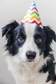 Portrait drôle de mignon chiot chien border collie souriant portant un chapeau idiot d'anniversaire en regardant la caméra isolée sur le mur blanc. concept de fête de joyeux anniversaire. vie d'animaux drôles d'animaux.