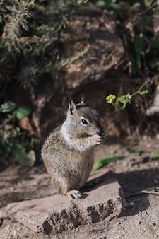 Portrait d'écureuil mignon