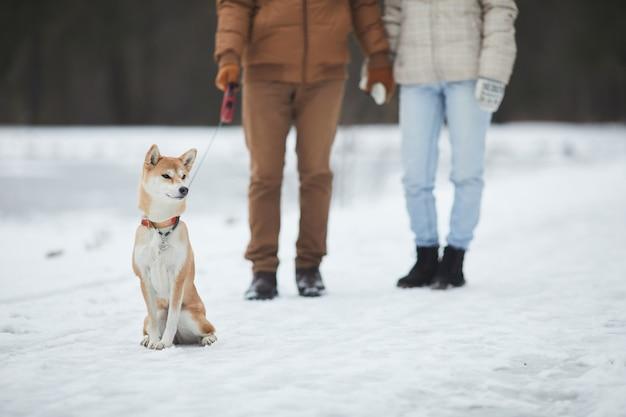 Portrait d'un élégant chien shiba posant à l'extérieur en hiver avec des personnes méconnaissables en arrière-plan, concept de couple walking dog in forest, copy space