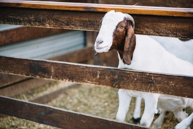 Portrait d'enfant dans la grange