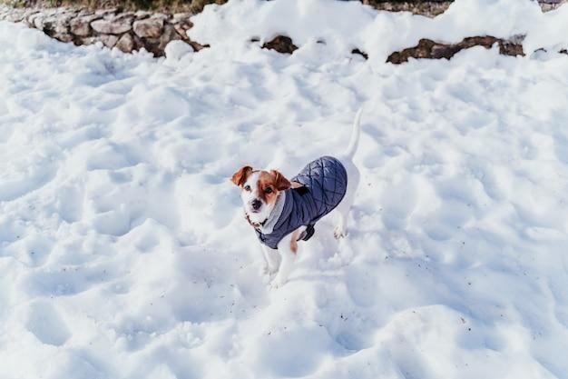 Portrait à l'extérieur d'un beau chien jack russell à la neige. l'hiver