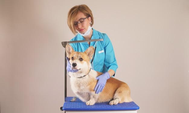 Portrait d'une femme vétérinaire qui s'occupe des animaux domestiques