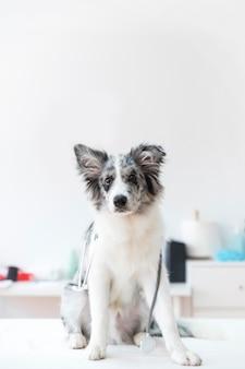 Portrait de femme vétérinaire avec stéthoscope sur tableau blanc