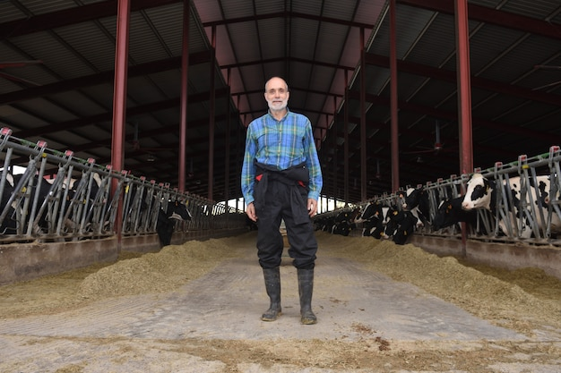 Portrait d'un fermier avec des vaches