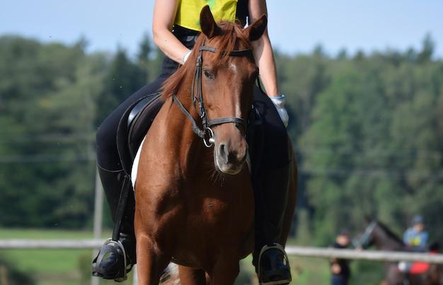 Portrait en gros plan d'un cheval au gingembre sur une compétition.