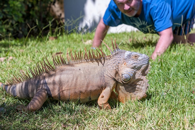 Le portrait en gros plan d'un iguane tropical