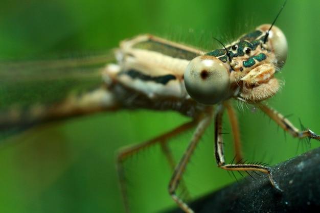 Portrait en gros plan d'une libellule