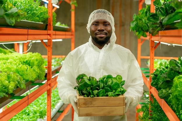 Portrait d'un ingénieur agricole barbu afro-américain positif en casquette et tenue de protection tenant une petite boîte de semis verts à la ferme verticale
