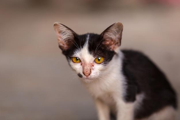 Portrait de jeune chat tigré sur fond marron